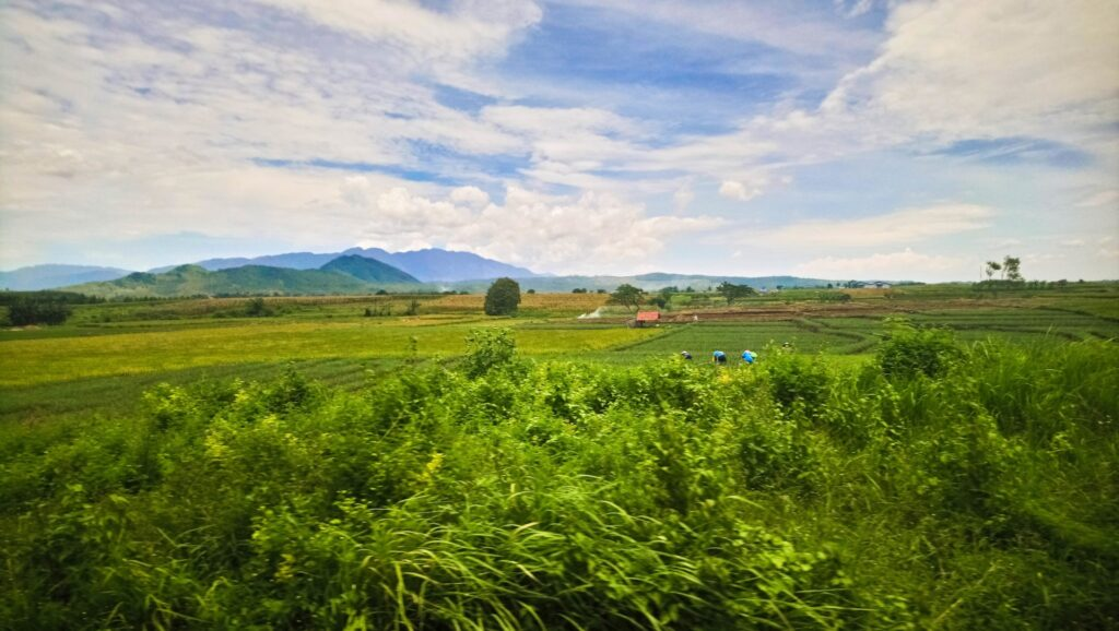 Enjoy the stunning countryside of Java from the train